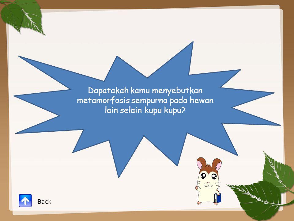 Dapatakah kamu menyebutkan metamorfosis sempurna pada hewan lain selain kupu kupu? Back