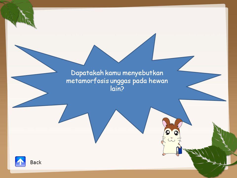 Dapatakah kamu menyebutkan metamorfosis unggas pada hewan lain? Back