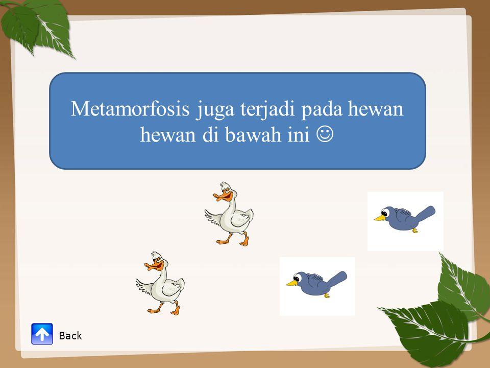Metamorfosis juga terjadi pada hewan hewan di bawah ini Back