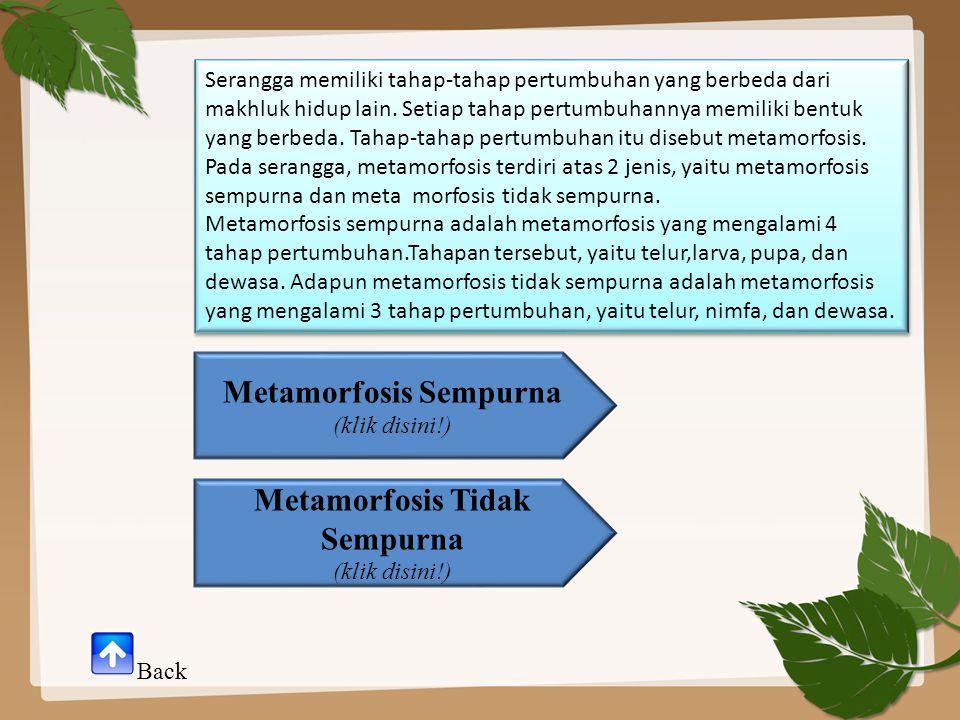 Metamorfosis Sempurna Serangga yang mengalami metamorfosis sempurna ialah serangga yang memiliki empat tahap pertumbuhan dalam daur hidupnya.
