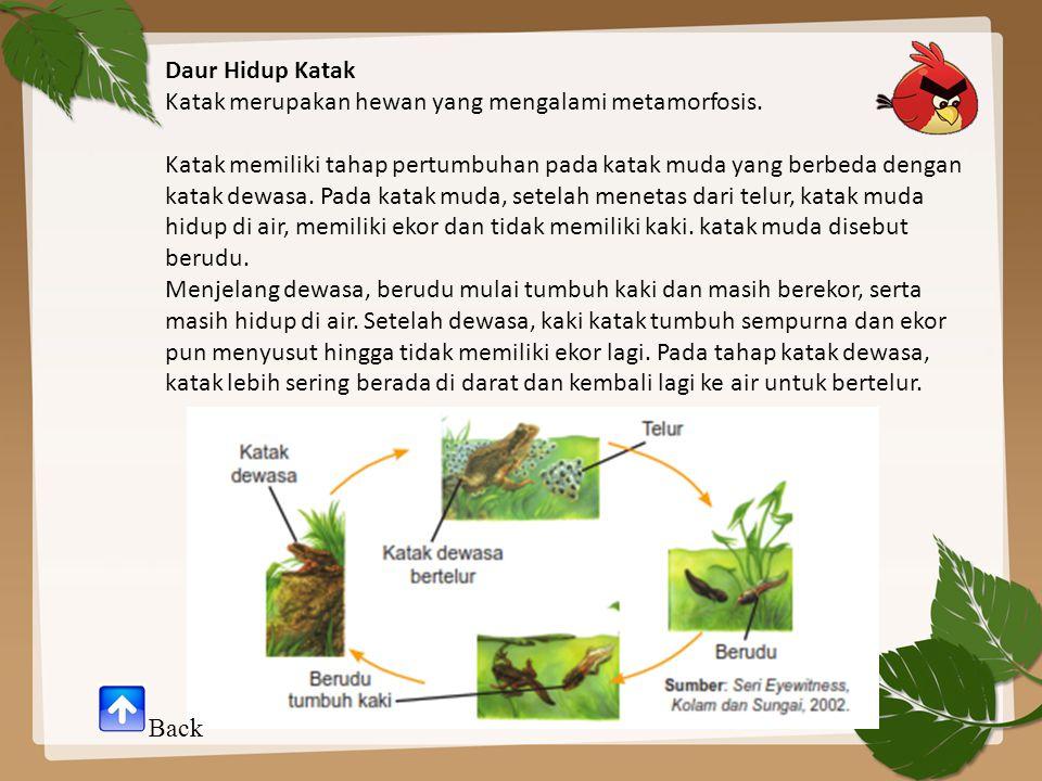 Daur Hidup Katak Katak merupakan hewan yang mengalami metamorfosis. Katak memiliki tahap pertumbuhan pada katak muda yang berbeda dengan katak dewasa.