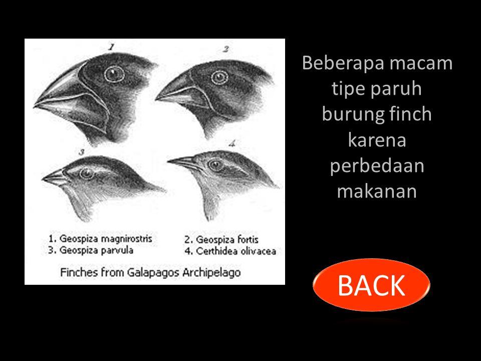 Beberapa macam tipe paruh burung finch karena perbedaan makanan