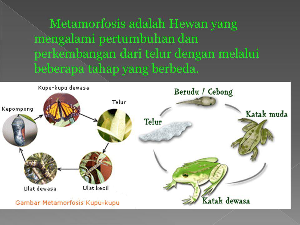 1. Hewan yang bertelur Dibedakan menjadi dua kelompok Hewan yang menetes dari telur kemudian mengalami pertumbuhan dan perkembangan Hewan yang mengala