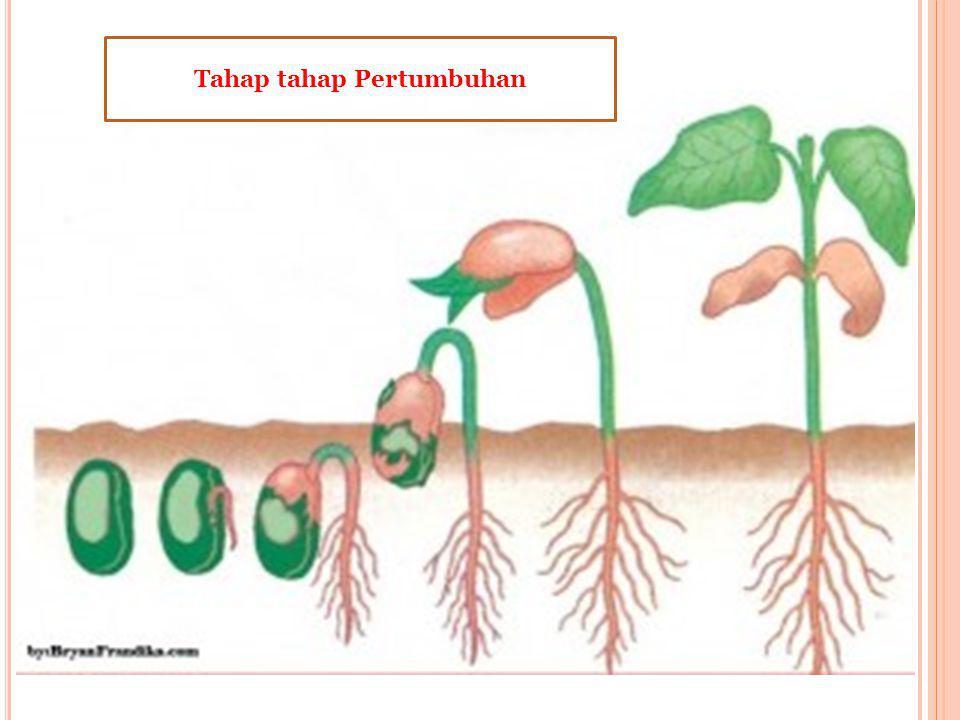 D. P ERTUMBUHAN DAN P ERKEMBANGAN T UMBUHAN Pertumbuhan dan perkembangan ditandai dengan pertambahan tinggi dan besar tumbuhan, pertambahan jumlah dan