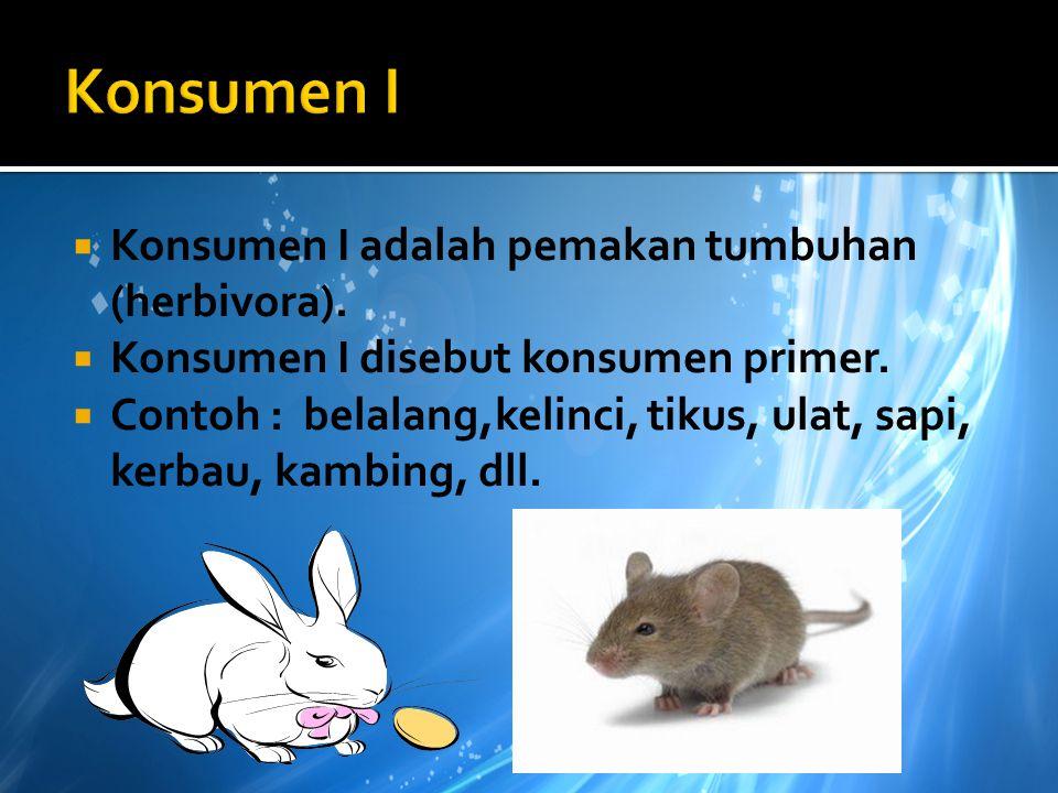 Produsen  Produsen adalah penghasil bahan makanan untuk hewan pemakan tumbuhan atau herbivora.  Dalam rantai makanan tumbuhan berperan sebagai produ