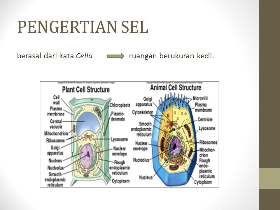 PENGERTIAN SEL berasal dari kata Cella ruangan berukuran kecil.