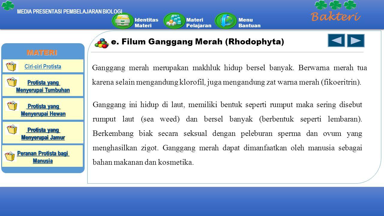Identitas Materi Materi Pelajaran Menu Bantuan MEDIA PRESENTASI PEMBELAJARAN BIOLOGI Bakteri e. Filum Ganggang Merah (Rhodophyta) Ganggang merah merup