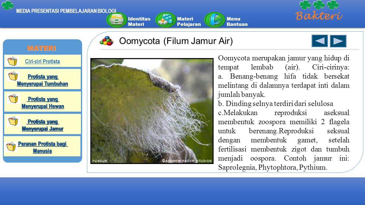 Identitas Materi Materi Pelajaran Menu Bantuan MEDIA PRESENTASI PEMBELAJARAN BIOLOGI Bakteri Oomycota (Filum Jamur Air) Oomycota merupakan jamur yang