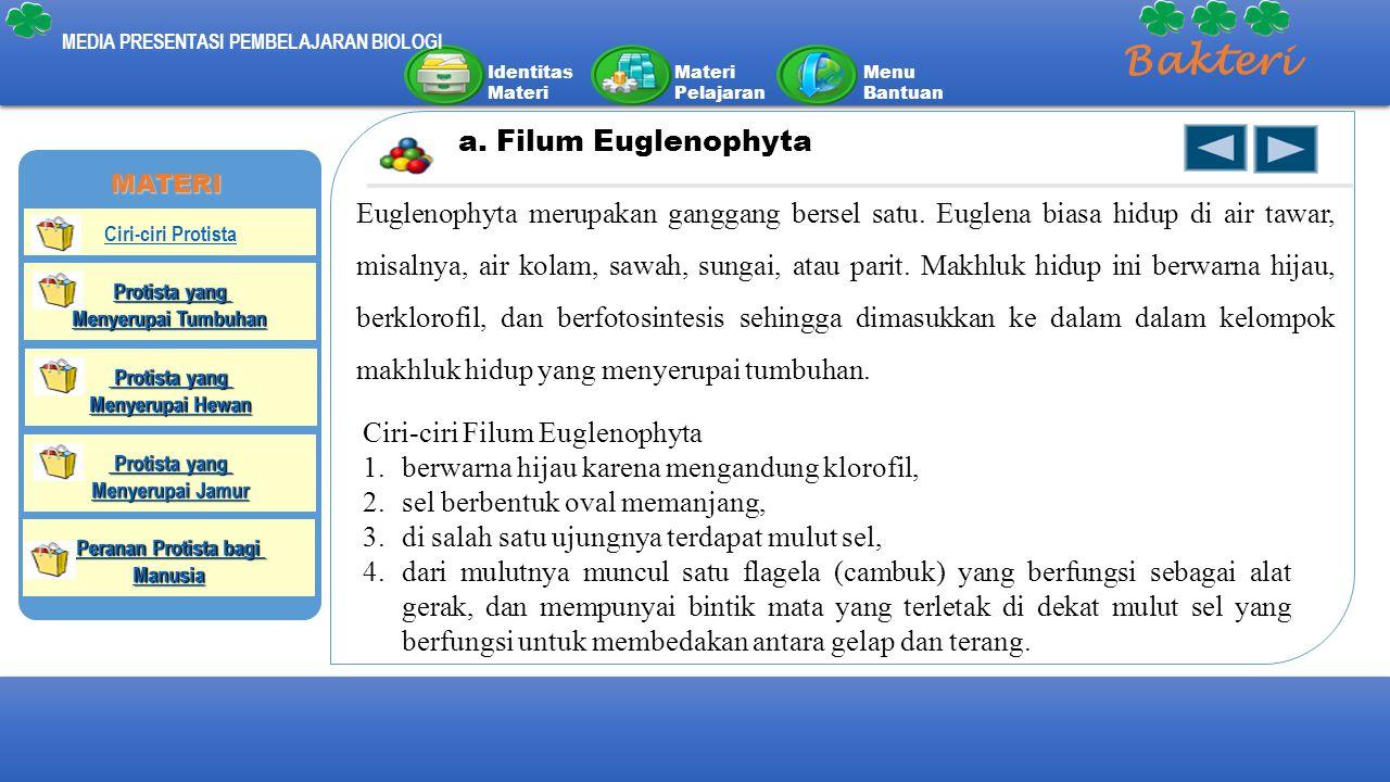 Identitas Materi Materi Pelajaran Menu Bantuan MEDIA PRESENTASI PEMBELAJARAN BIOLOGI Bakteri a. Filum Euglenophyta Euglenophyta merupakan ganggang ber