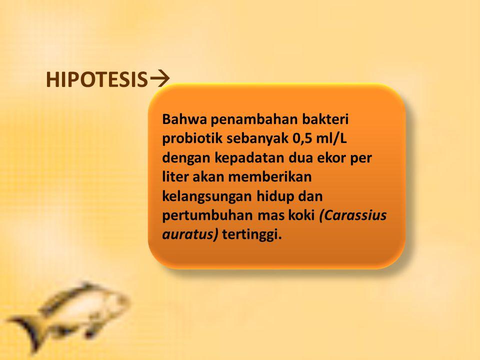 HIPOTESIS  Bahwa penambahan bakteri probiotik sebanyak 0,5 ml/L dengan kepadatan dua ekor per liter akan memberikan kelangsungan hidup dan pertumbuhan mas koki (Carassius auratus) tertinggi.