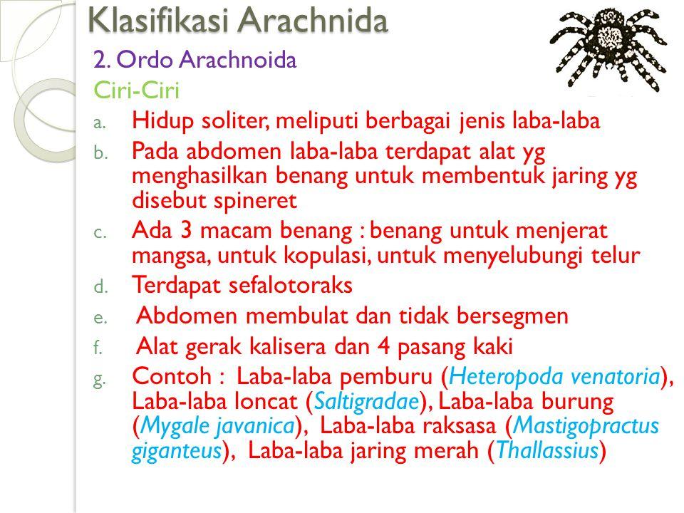 Klasifikasi Arachnida 2. Ordo Arachnoida Ciri-Ciri a.