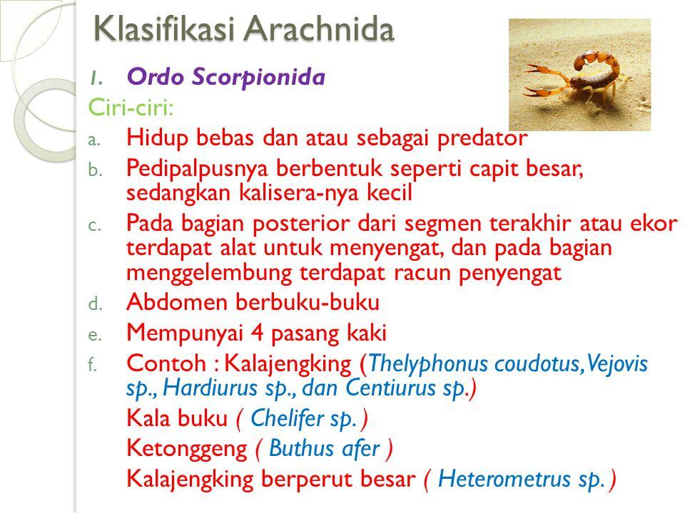Klasifikasi Arachnida 1. Ordo Scorpionida Ciri-ciri: a.