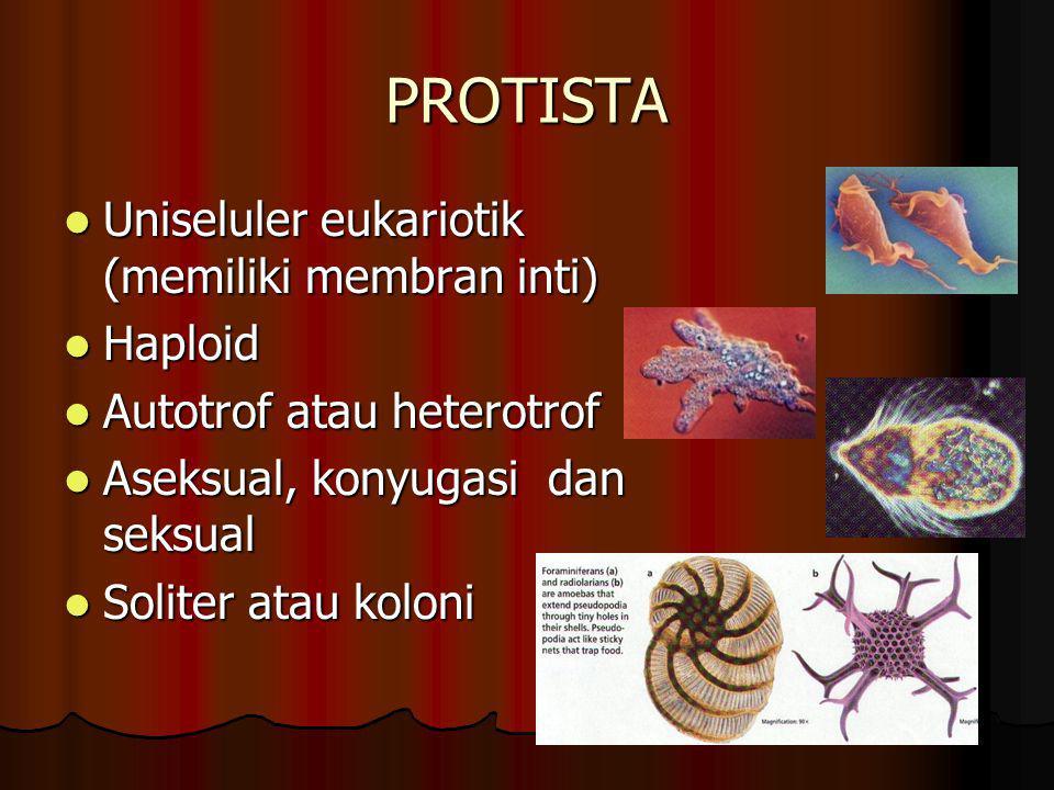 MONERA Terdiri atas Bakteri dan Alga biru Terdiri atas Bakteri dan Alga biru Uniseluler prokariotik Uniseluler prokariotik Haploid Haploid Autotrof/he
