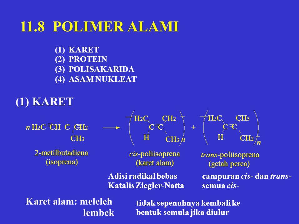 11.8 POLIMER ALAMI (1) (2) (3) (4) KARET PROTEIN POLISAKARIDA ASAM NUKLEAT (1) KARET CH 3 H H 2 C CH 2 C + H H 2 C CH 3 C CH 2 CH 3 n n 2-metilbutadie