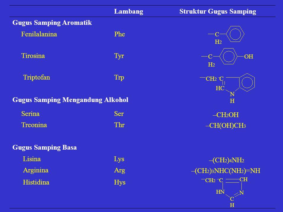 LambangStruktur Gugus Samping Gugus Samping Aromatik FenilalaninaPhe TirosinaTyr TriptofanTrp Gugus Samping Mengandung Alkohol Lisina Arginina Lys Arg