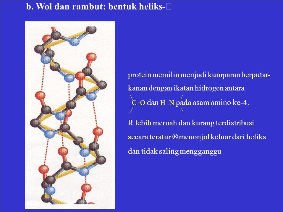 b. Wol dan rambut: bentuk heliks-  R lebih meruah dan kurang terdistribusi secara teratur  menonjol keluar dari heliks dan tidak saling mengganggu
