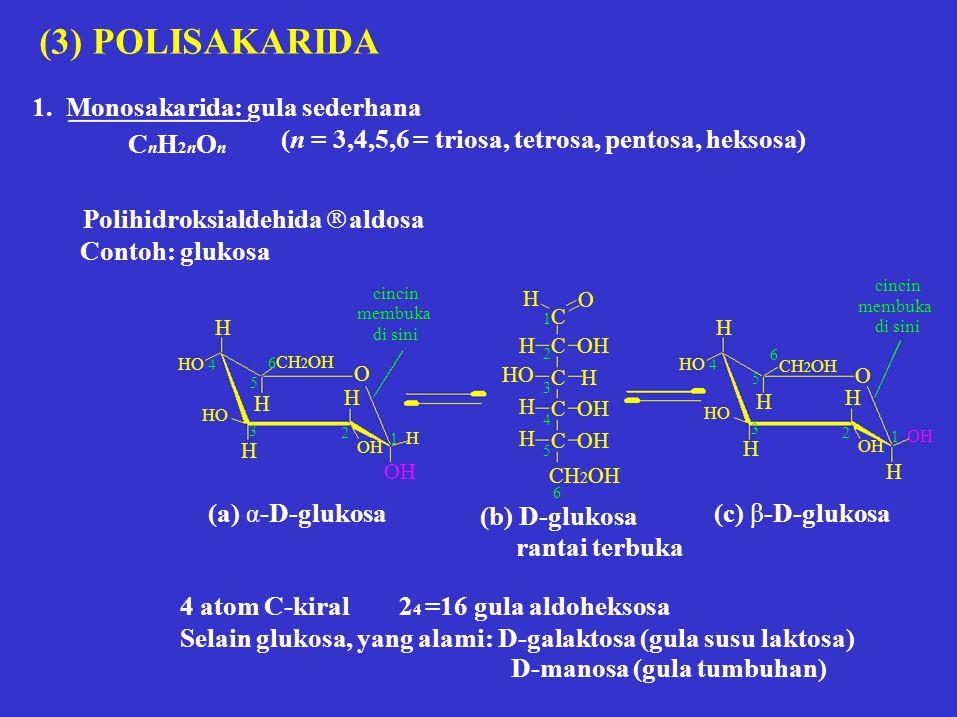 1 H C OH C H C OH CH 2 OH 1 OH (3) POLISAKARIDA 1. Monosakarida: gula sederhana CnH2nOnCnH2nOn (n = 3,4,5,6 = triosa, tetrosa, pentosa, heksosa) Polih