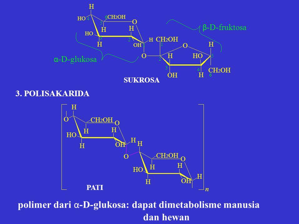 H O HHO O O H 2 OH 1 HO 4 HO 6 CH 2 OH 5 H 3 H CH 2 OH 6 H CH 2 OH 1 2 3 OH 4H4H 5 α -D-glukosa β -D-fruktosa H SUKROSA O 3. POLISAKARIDA H HHHH O H H