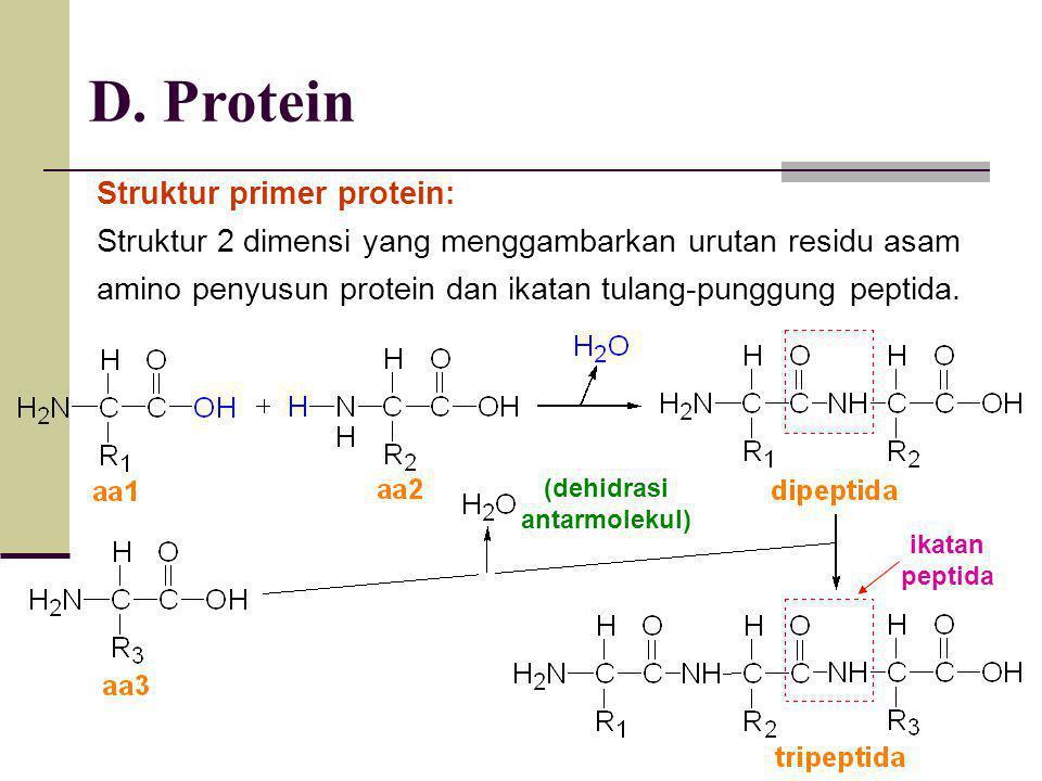 D. Protein Struktur primer protein: Struktur 2 dimensi yang menggambarkan urutan residu asam amino penyusun protein dan ikatan tulang-punggung peptida