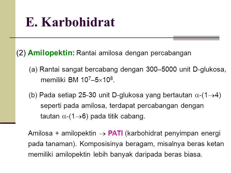E. Karbohidrat (2) Amilopektin: Rantai amilosa dengan percabangan (a) Rantai sangat bercabang dengan 300–5000 unit D-glukosa, memiliki BM 10 7 –5  10