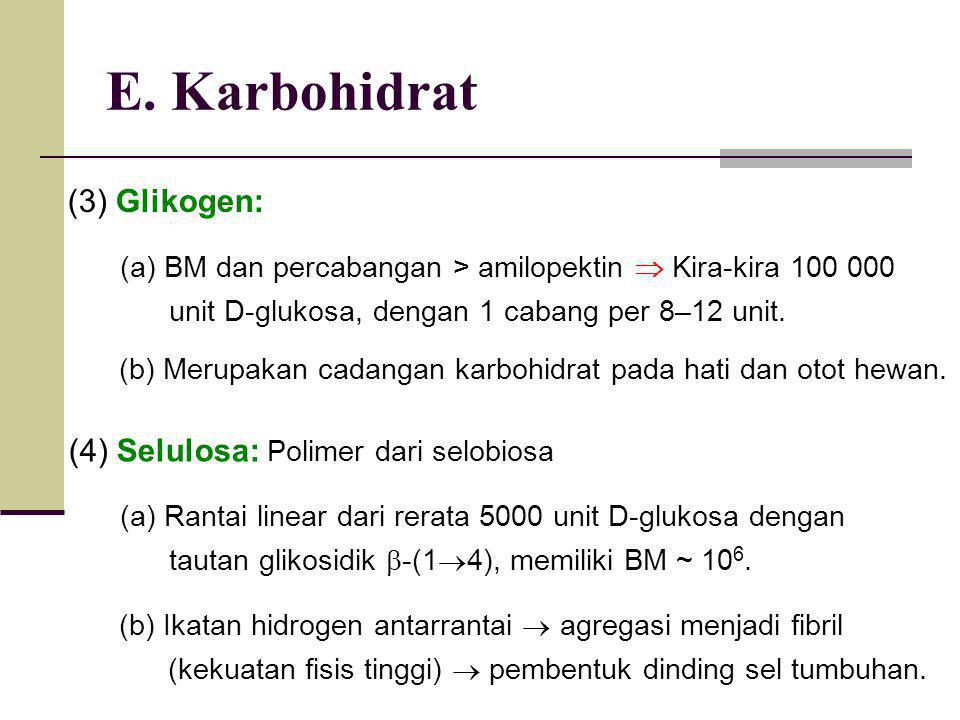 E. Karbohidrat (3) Glikogen: (a) BM dan percabangan > amilopektin  Kira-kira 100 000 unit D-glukosa, dengan 1 cabang per 8–12 unit. (b) Merupakan cad
