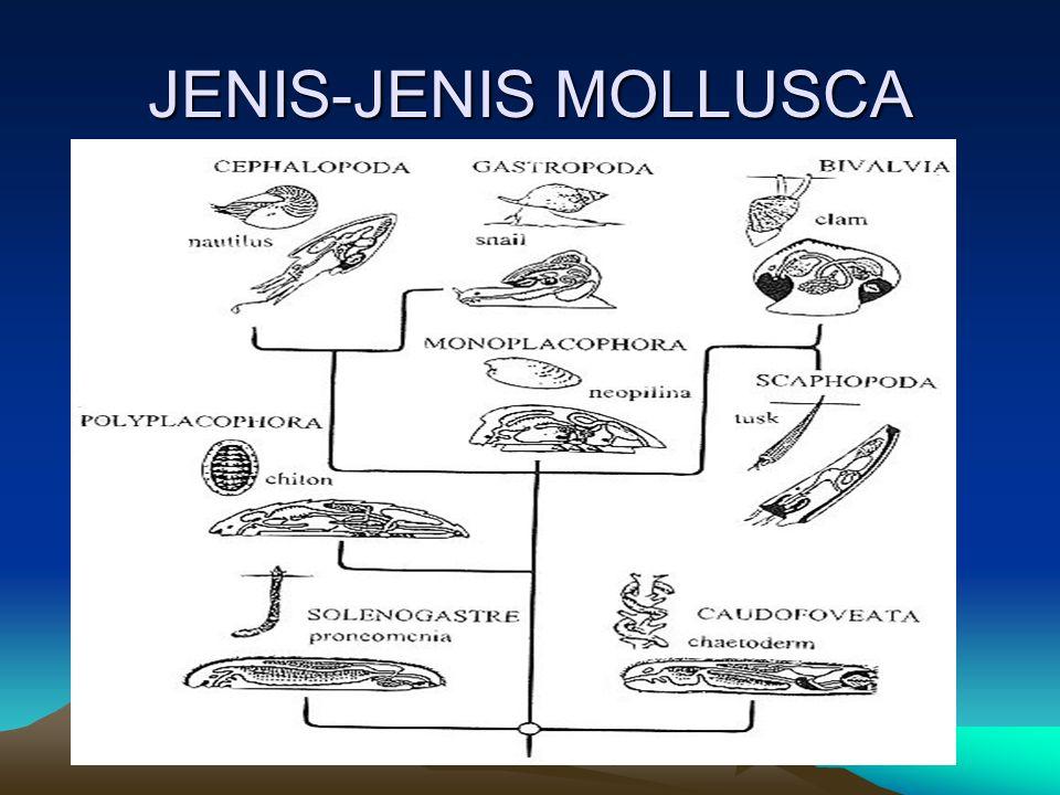 JENIS-JENIS MOLLUSCA