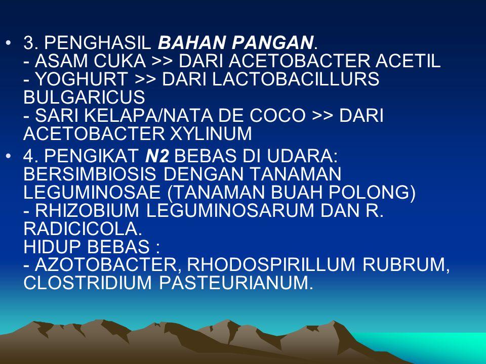 3. PENGHASIL BAHAN PANGAN. - ASAM CUKA >> DARI ACETOBACTER ACETIL - YOGHURT >> DARI LACTOBACILLURS BULGARICUS - SARI KELAPA/NATA DE COCO >> DARI ACETO