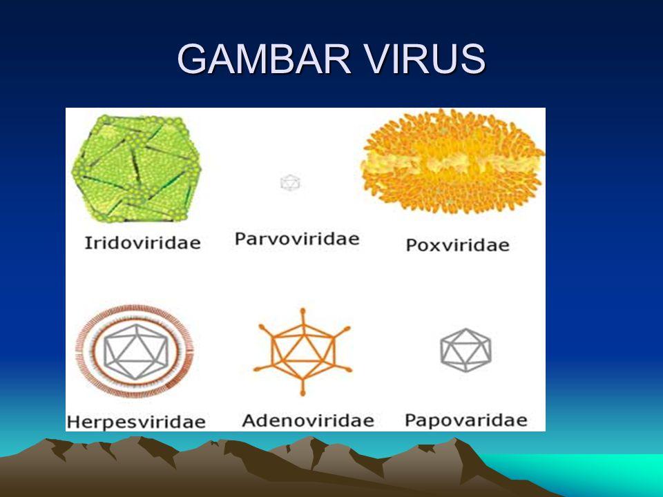 GAMBAR VIRUS