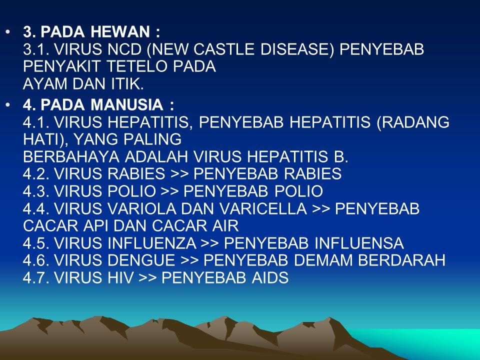 3. PADA HEWAN : 3.1. VIRUS NCD (NEW CASTLE DISEASE) PENYEBAB PENYAKIT TETELO PADA AYAM DAN ITIK. 4. PADA MANUSIA : 4.1. VIRUS HEPATITIS, PENYEBAB HEPA