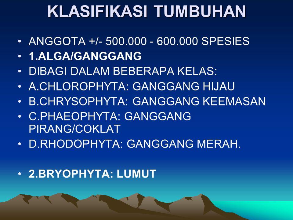 KLASIFIKASI TUMBUHAN ANGGOTA +/- 500.000 - 600.000 SPESIES 1.ALGA/GANGGANG DIBAGI DALAM BEBERAPA KELAS: A.CHLOROPHYTA: GANGGANG HIJAU B.CHRYSOPHYTA: G