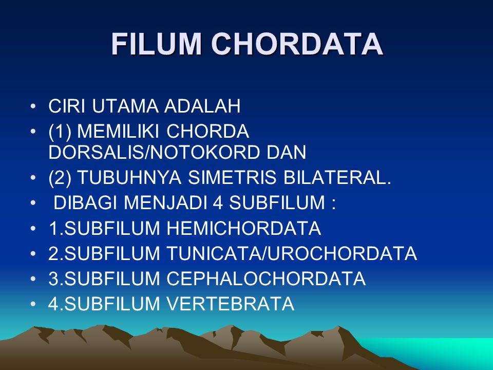 FILUM CHORDATA CIRI UTAMA ADALAH (1) MEMILIKI CHORDA DORSALIS/NOTOKORD DAN (2) TUBUHNYA SIMETRIS BILATERAL. DIBAGI MENJADI 4 SUBFILUM : 1.SUBFILUM HEM