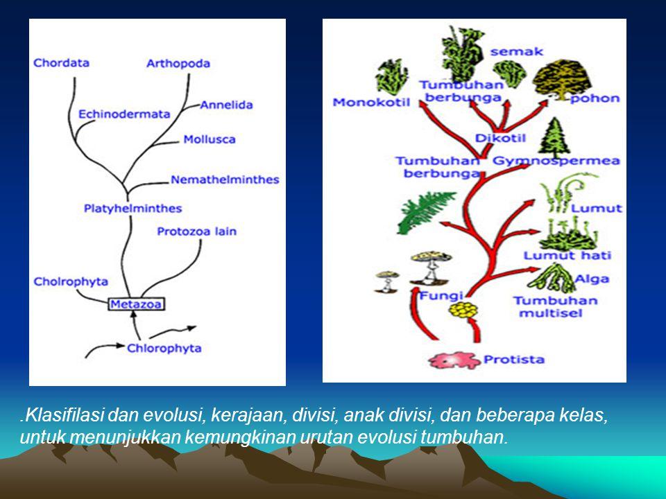 .Klasifilasi dan evolusi, kerajaan, divisi, anak divisi, dan beberapa kelas, untuk menunjukkan kemungkinan urutan evolusi tumbuhan.