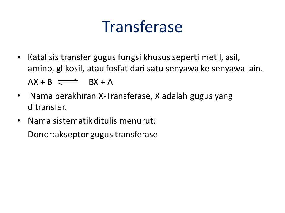 Transferase Katalisis transfer gugus fungsi khusus seperti metil, asil, amino, glikosil, atau fosfat dari satu senyawa ke senyawa lain. AX + B BX + A