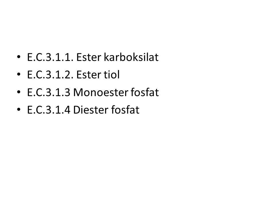 E.C.3.1.1. Ester karboksilat E.C.3.1.2. Ester tiol E.C.3.1.3 Monoester fosfat E.C.3.1.4 Diester fosfat