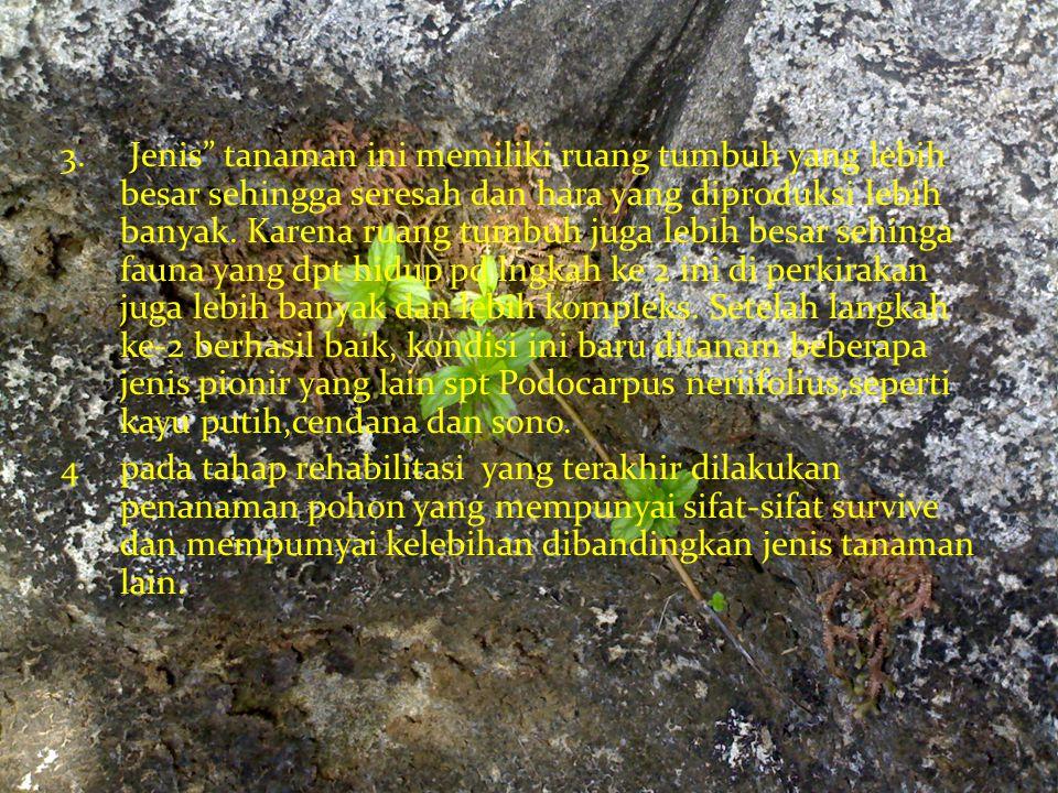 """3. Jenis"""" tanaman ini memiliki ruang tumbuh yang lebih besar sehingga seresah dan hara yang diproduksi lebih banyak. Karena ruang tumbuh juga lebih be"""