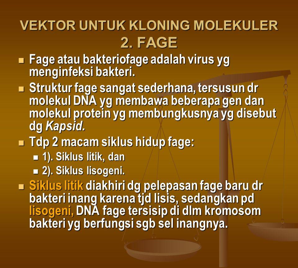VEKTOR UNTUK KLONING MOLEKULER 2. FAGE Fage atau bakteriofage adalah virus yg menginfeksi bakteri. Fage atau bakteriofage adalah virus yg menginfeksi