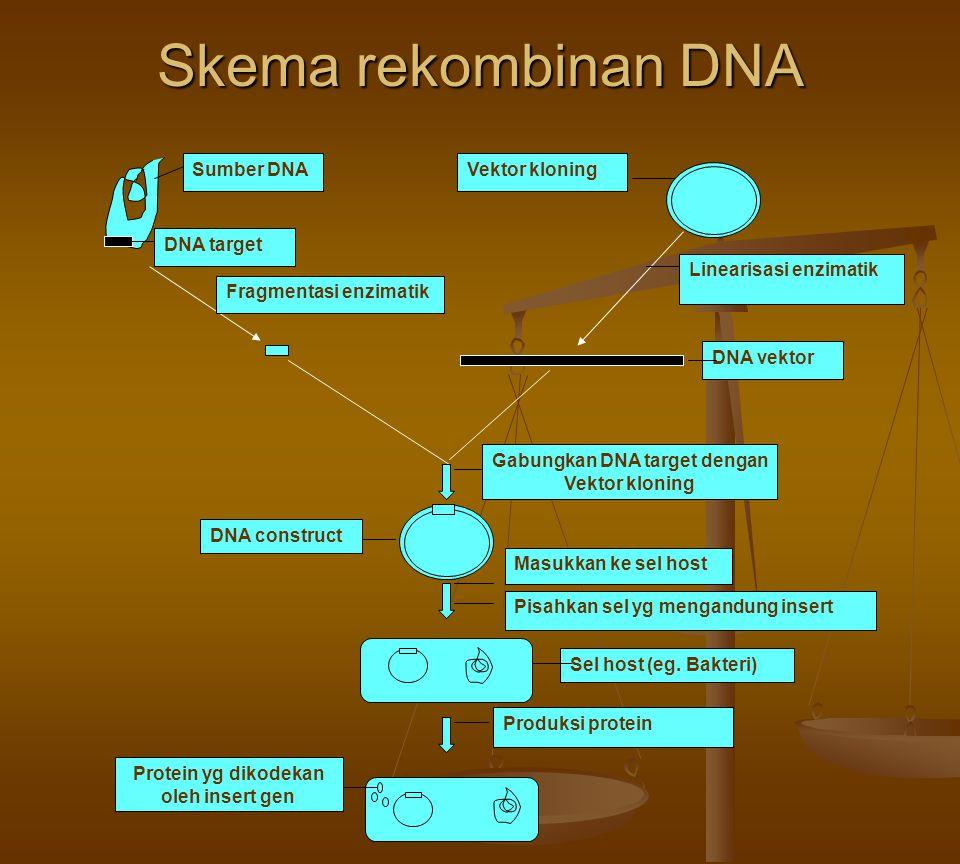 Skema rekombinan DNA Sumber DNA DNA target Fragmentasi enzimatik Vektor kloning Linearisasi enzimatik DNA vektor Gabungkan DNA target dengan Vektor kl
