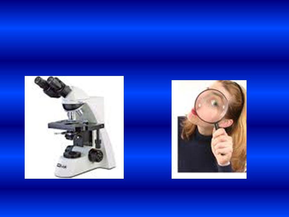 . Bagian-bagian yang ada pada kamera mirip dengan bagian-bagian mata Diagram kamera