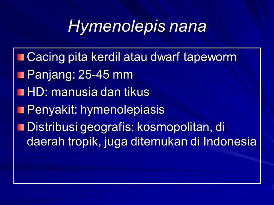 Hymenolepis nana Cacing pita kerdil atau dwarf tapeworm Panjang: 25-45 mm HD: manusia dan tikus Penyakit: hymenolepiasis Distribusi geografis: kosmopolitan, di daerah tropik, juga ditemukan di Indonesia