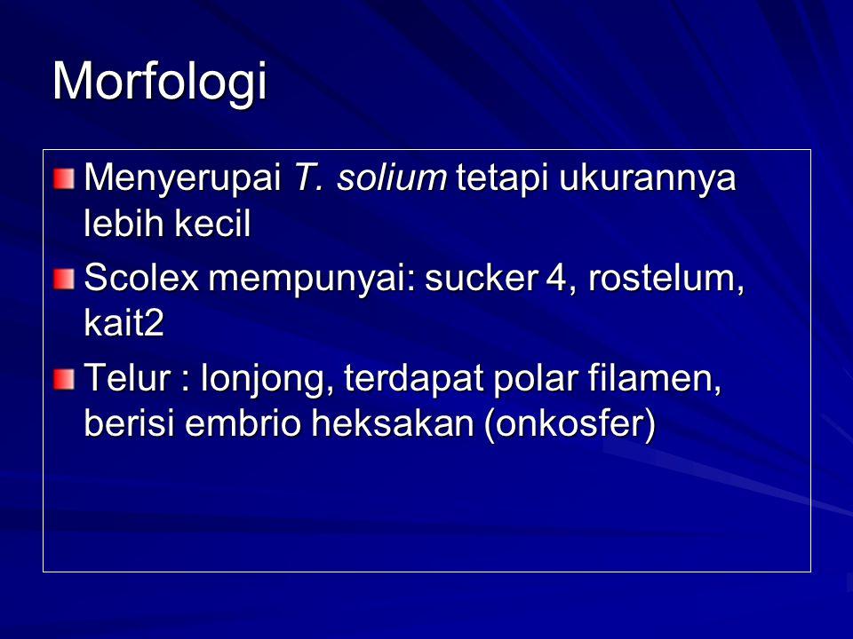 Morfologi Menyerupai T.