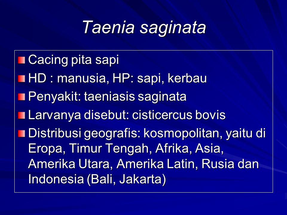 Taenia saginata Cacing pita sapi HD : manusia, HP: sapi, kerbau Penyakit: taeniasis saginata Larvanya disebut: cisticercus bovis Distribusi geografis: kosmopolitan, yaitu di Eropa, Timur Tengah, Afrika, Asia, Amerika Utara, Amerika Latin, Rusia dan Indonesia (Bali, Jakarta)
