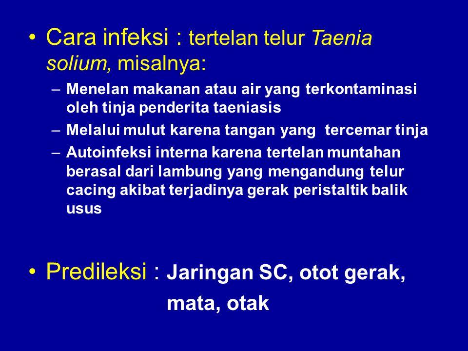 Cara infeksi : tertelan telur Taenia solium, misalnya: –Menelan makanan atau air yang terkontaminasi oleh tinja penderita taeniasis –Melalui mulut kar