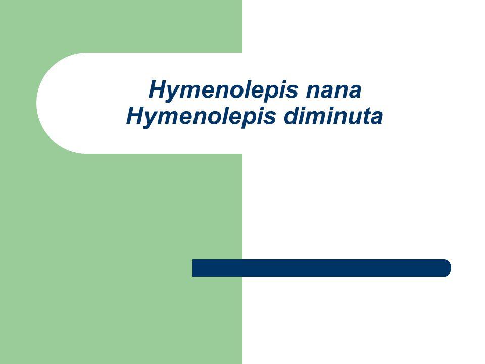 Hymenolepis nana Hymenolepis diminuta