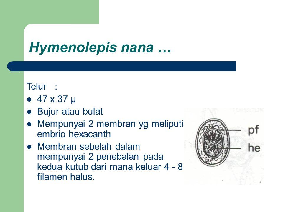 Hymenolepis nana … Telur: 47 x 37 µ Bujur atau bulat Mempunyai 2 membran yg meliputi embrio hexacanth Membran sebelah dalam mempunyai 2 penebalan pada