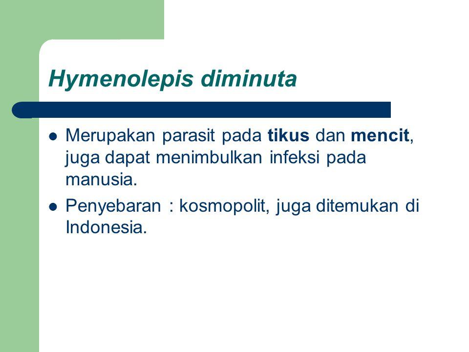 Hymenolepis diminuta Merupakan parasit pada tikus dan mencit, juga dapat menimbulkan infeksi pada manusia. Penyebaran : kosmopolit, juga ditemukan di