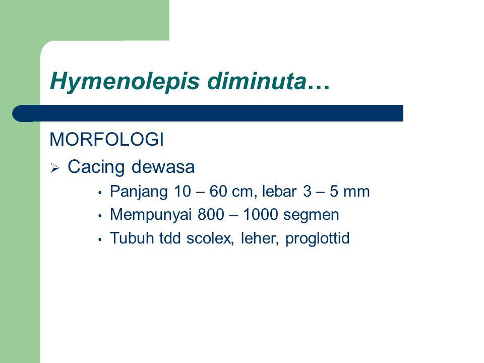 Hymenolepis diminuta… MORFOLOGI  Cacing dewasa Panjang 10 – 60 cm, lebar 3 – 5 mm Mempunyai 800 – 1000 segmen Tubuh tdd scolex, leher, proglottid