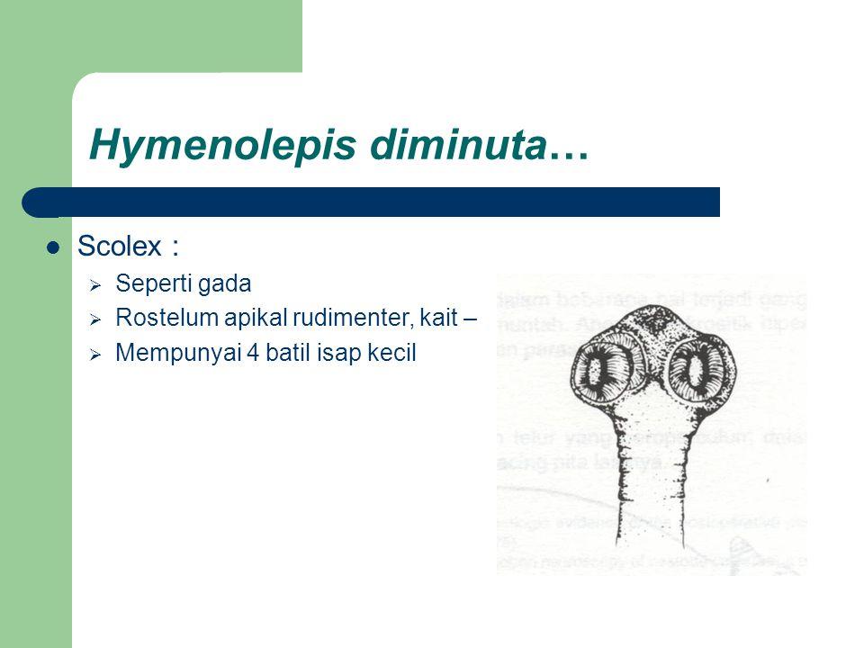 Hymenolepis diminuta… Scolex :  Seperti gada  Rostelum apikal rudimenter, kait –  Mempunyai 4 batil isap kecil