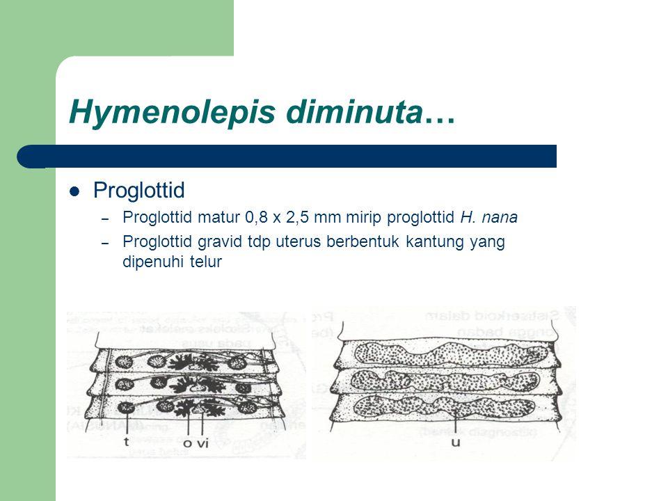 Hymenolepis diminuta… Proglottid – Proglottid matur 0,8 x 2,5 mm mirip proglottid H. nana – Proglottid gravid tdp uterus berbentuk kantung yang dipenu