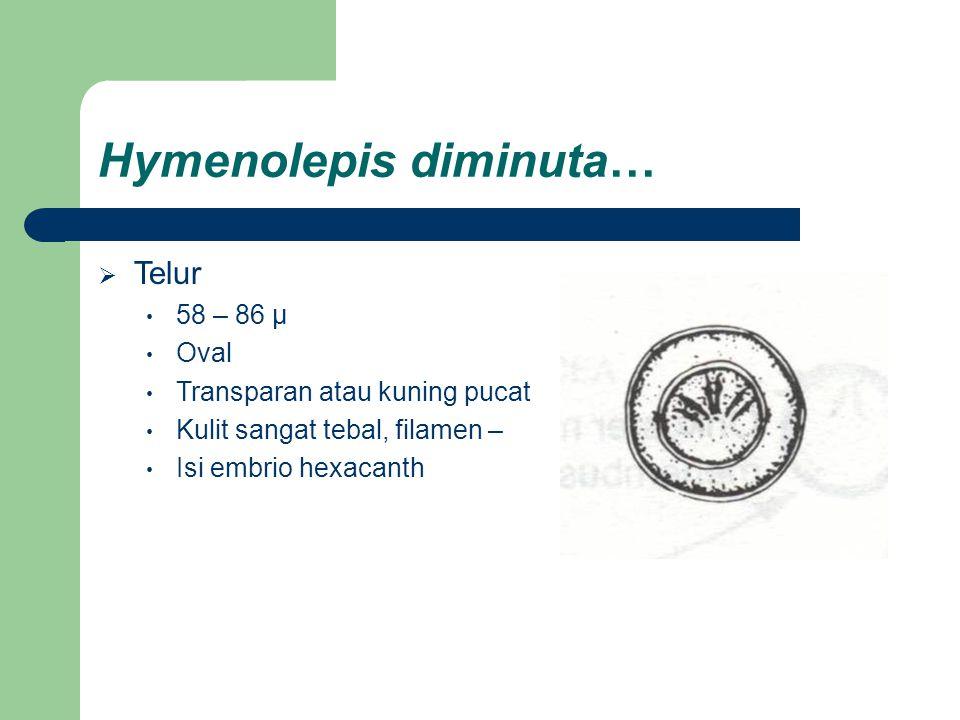 Hymenolepis diminuta…  Telur 58 – 86 µ Oval Transparan atau kuning pucat Kulit sangat tebal, filamen – Isi embrio hexacanth