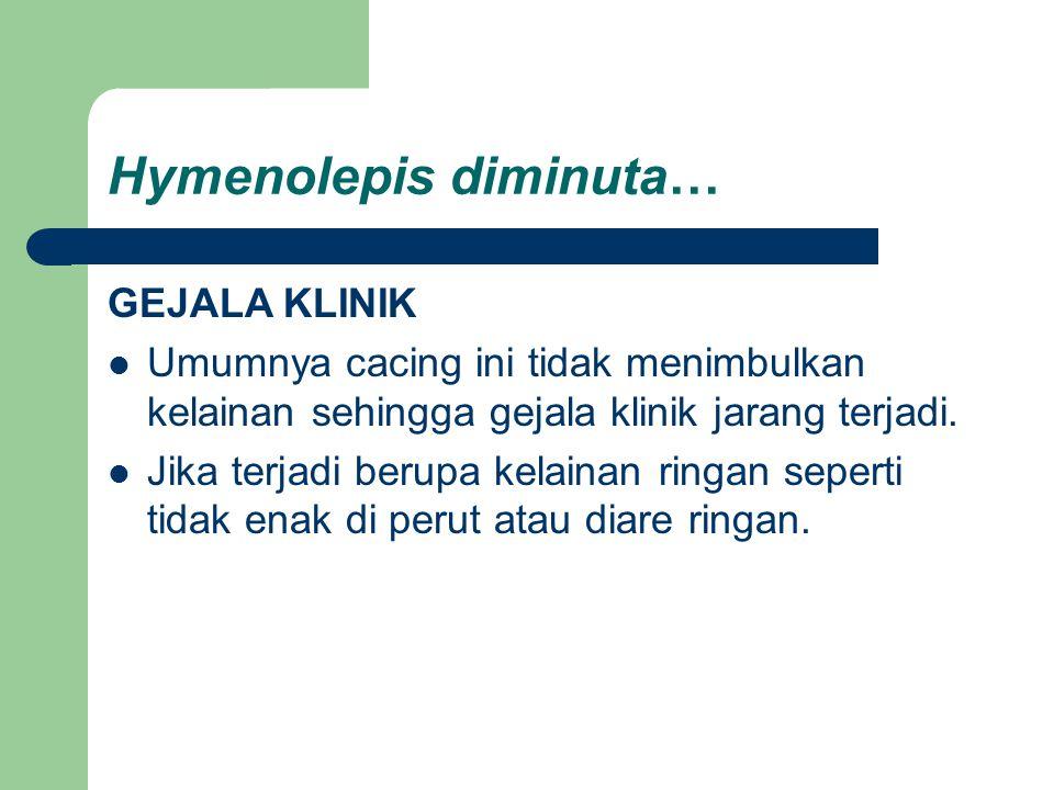 Hymenolepis diminuta… GEJALA KLINIK Umumnya cacing ini tidak menimbulkan kelainan sehingga gejala klinik jarang terjadi. Jika terjadi berupa kelainan
